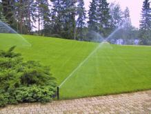 Рулонный газон для тенистых мест