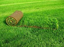 Стандартный рулонный газон
